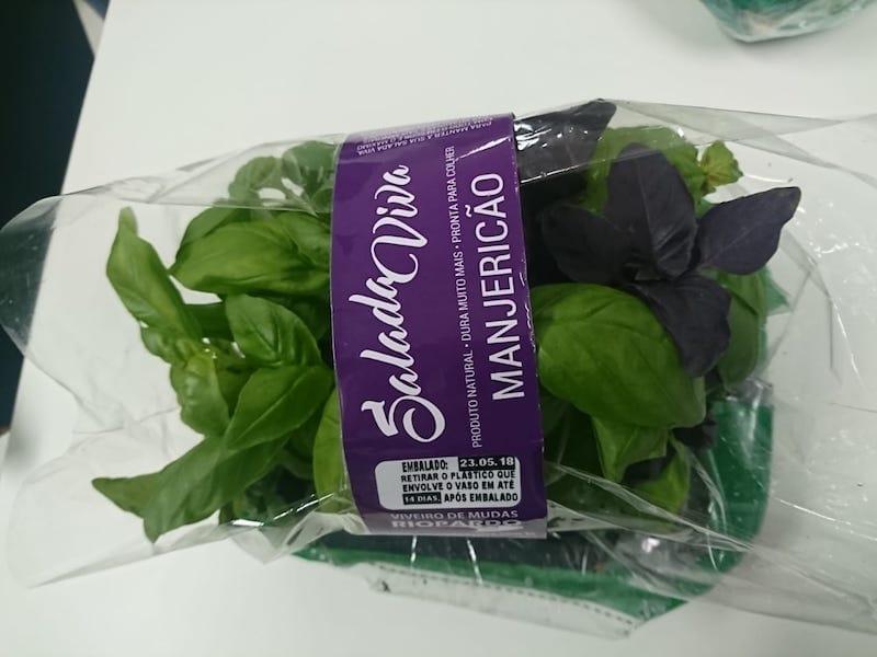 Manjericão plantado comprado pelo site